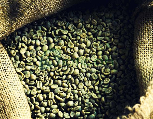สารสกัดจากกาแฟสด (Green Bean Coffee) - รับผลิตอาหารเสริม
